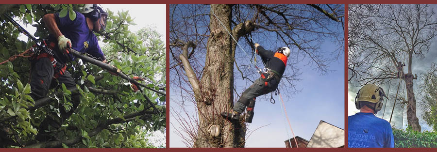 Tree Surgery in Edinburgh and Central Scotland